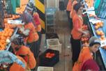 По приглашению Торгово-Промышленной Палаты области Ыспарта здесь побывали руководители НАОРЦ, где познакомились с работой сельскохозяйственных производств, перерабатывающих предприятий, фермерских хозяйствах, складов и оптово - распределительных центров.