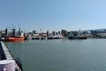 Рыбный терминал морского порта Махачкалы
